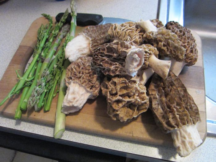 Wild Morels and Asparagus