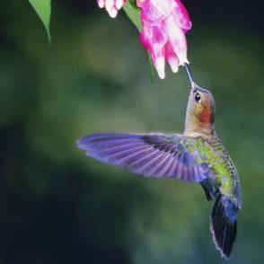 How To Feed Hummingbirds