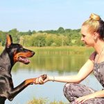 The Importance of Learning How to Train Your Dog Yourself