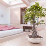 Feng Shui Living Room Basics And Tips