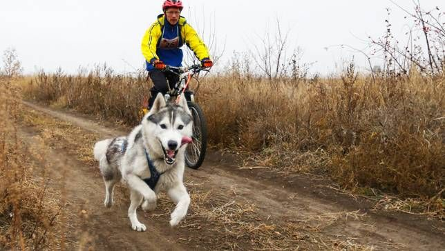 Running a Dog With A Bicycle