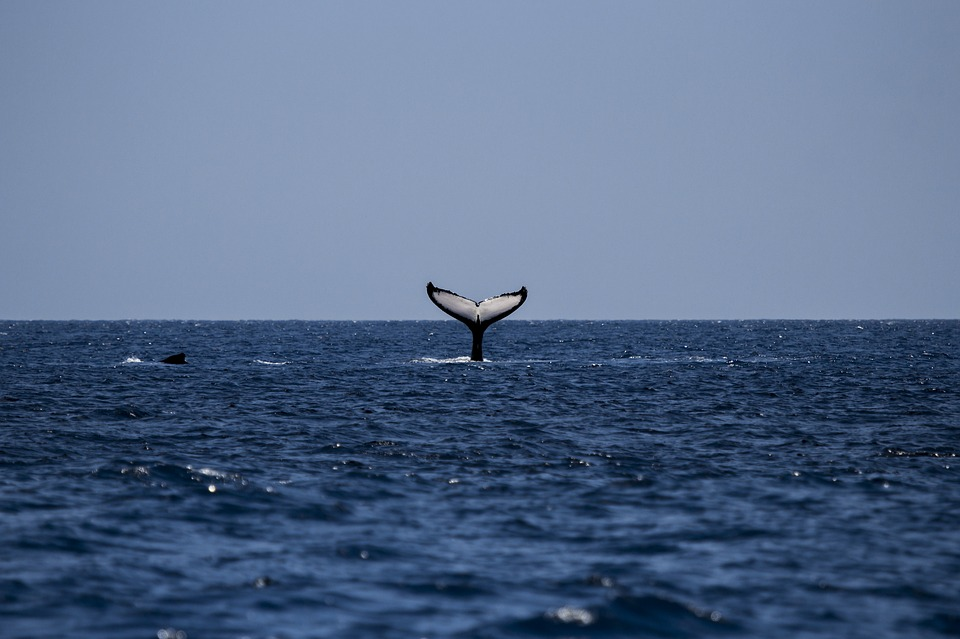 Venturing Spots in Sydney for Whale Watching