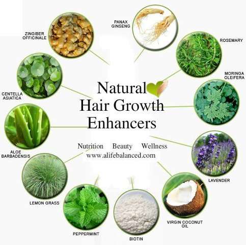 Best Herbs that Promote Hair Growth