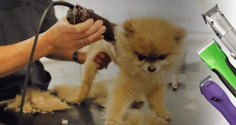 What to Look For in Hair Clippers for Dogs