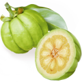 Garcinia Cambogia: Why Should You Know These Words?