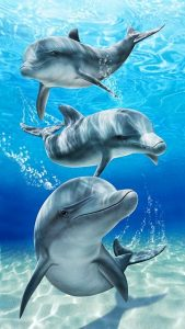 Baron bay dolphins velour brazilian beach towel 30x60 inches