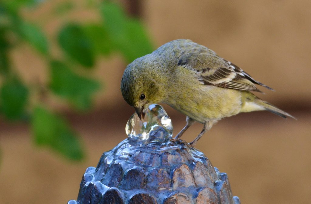 8 Ways to Make Your Home Bird-Friendly