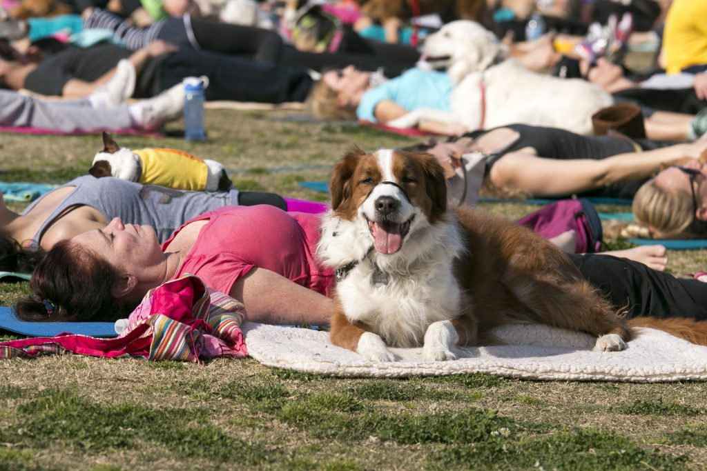 Practicing Yoga with Your Dog