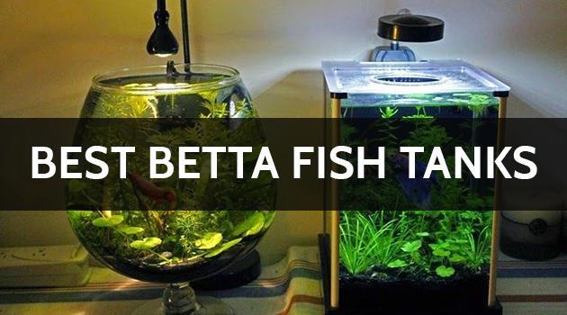 9 Best Betta Fish Tank and Aquarium Reviews (Updated Buyer Guide 2021)
